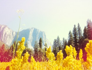 El Capitan Meadows, Yosemite