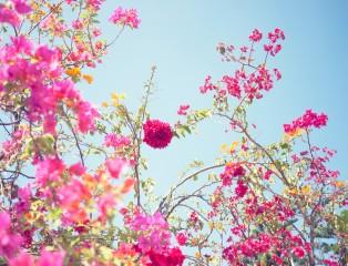 Shankar Flowers